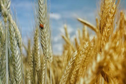 harvest123